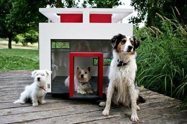 casa-diseno-perros-1